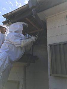 ハチ駆除作業
